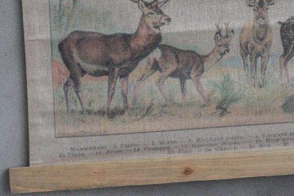 Oude schoolkaart dieren 80 x 100 cm | 8719097022735