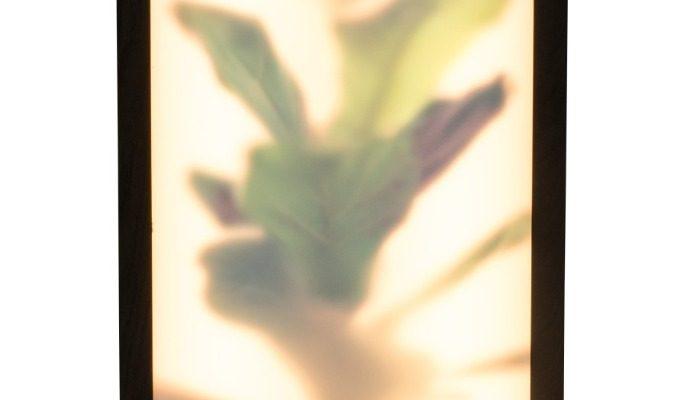Zuiver Grow L Vloerlamp – Roomdivider – 26x8x61- LED – Fiddle Leaf Fig | 8718548051034