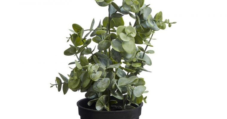 Kunstplant Eucalyptus Groen